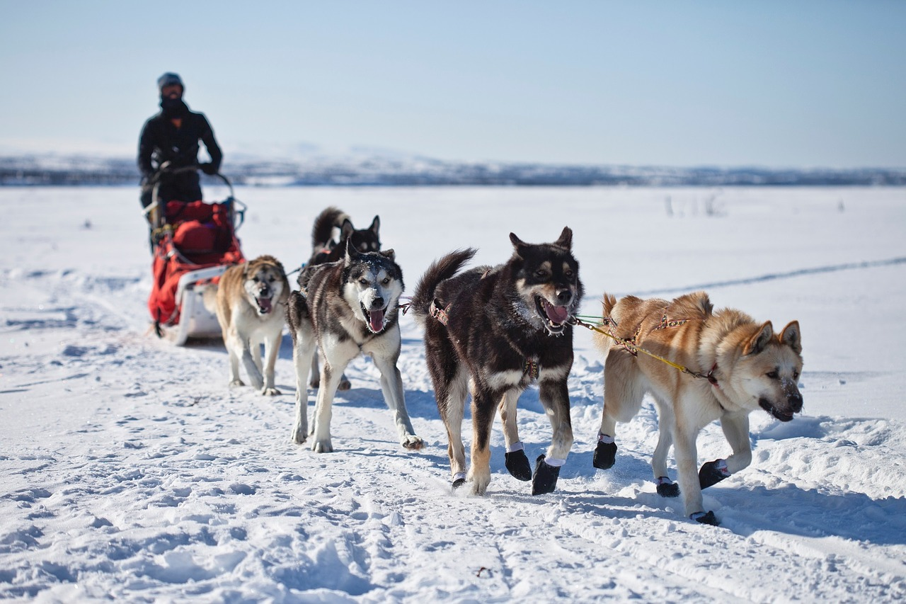 6. Visit an ice hotel and go dog sledding